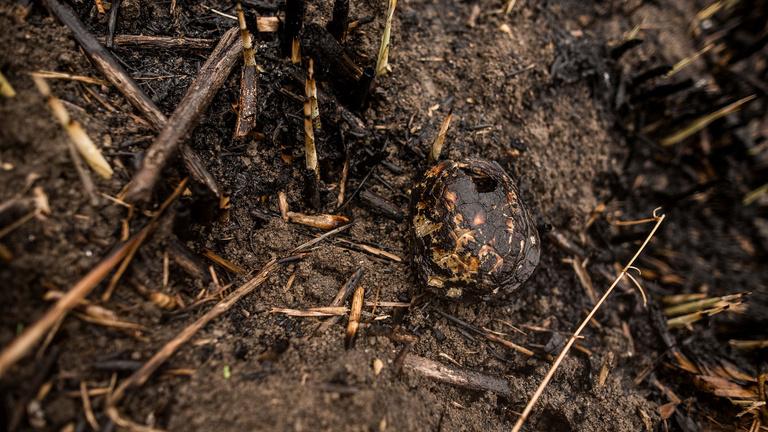 Az eső jól illik a megégetett teknősökhöz