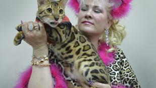 Akkor most mutatjuk a kirgiz macskakiállítás legmenőbb arcait