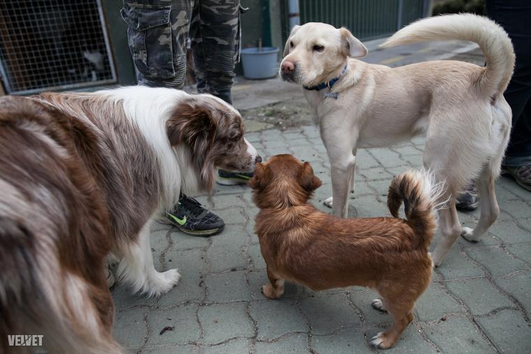 Az Alapítvány feladatai között szerepel az állatmentés, elhelyezés, ivartalanítás, örökbeadás, oktatás és felvilágosítás.