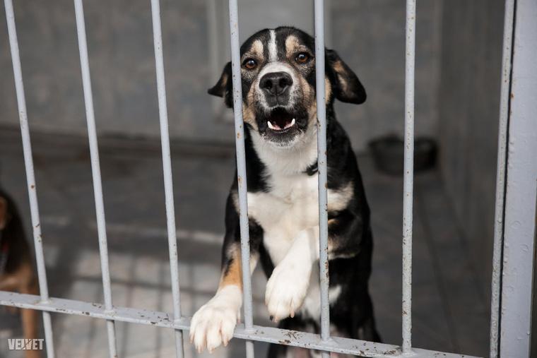 A Felelős Állattartás Napját rögtön egy rekordkísérlettel indítják.
