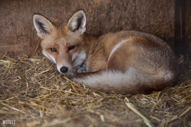 Küldetésük a kóbor állatok számának csökkentése és a felelős állattartás népszerűsítése.