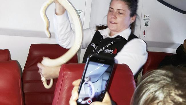 Gépen felejtett kígyó késleltette az indulást