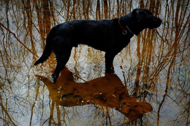 Azért is vigyázzanak a kutyákra az erdőben, mert vadászterületen kilőhetik őket túlbuzgó vadászok. És nyakig mocskosak lesznek.