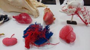 Hogyan nyomtatható ki egy emberi vagy állati szerv 3D nyomtatással?