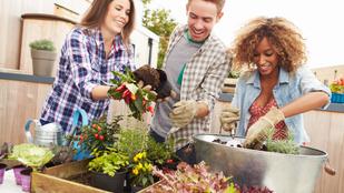Akciók tavaszi takarításhoz és kertészkedéshez