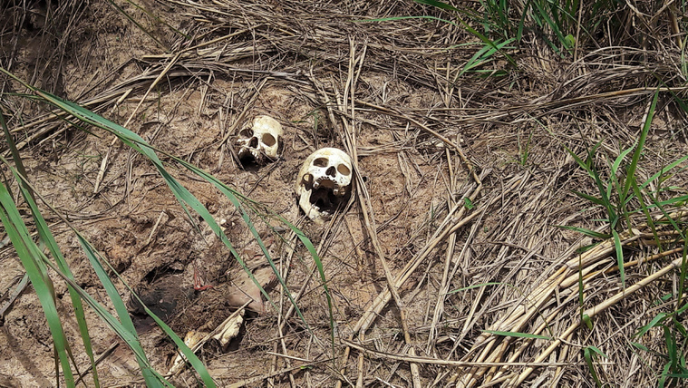 Tömegsírokat találtak Kongóban