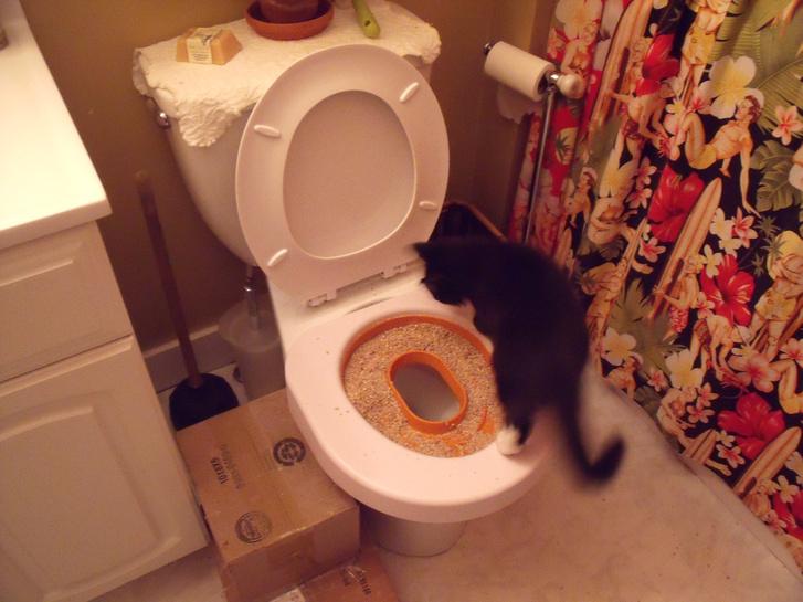 Vécére szoktató macskaalom