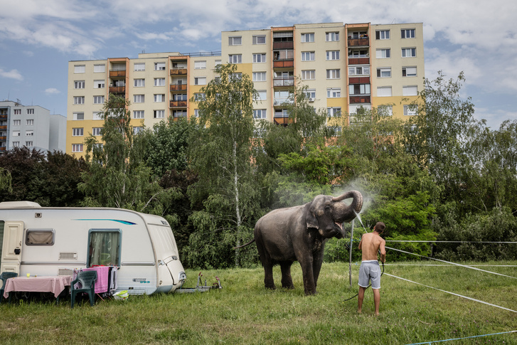 5. Művészet - műalkotás vagy művészeti tevékenység ábrázolása fotóriporteri eszközökkel (egyedi)1. díj: Kállai Márton (Szabad Föld): Elefántfürdő