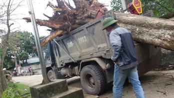Több mint egymillió dollárért kelt el egy ritka vietnami fa