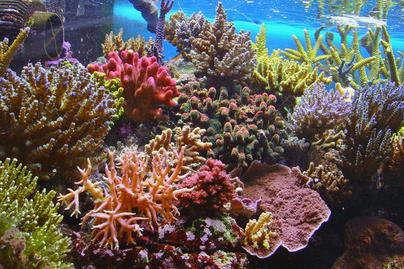 nagykep?cikkid=170042&kep=nagy-korallzatony-lead