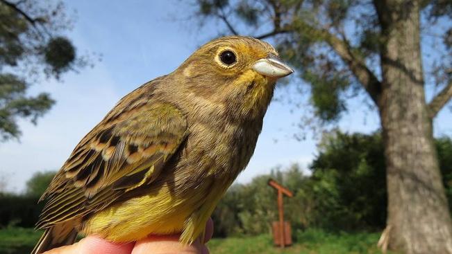 Költő madarak füttykoncertjére szerveznek túrát a Mecsek lábánál