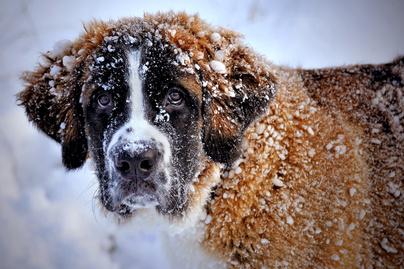 nagykep?cikkid=168122&kep=havas-kutya-lead