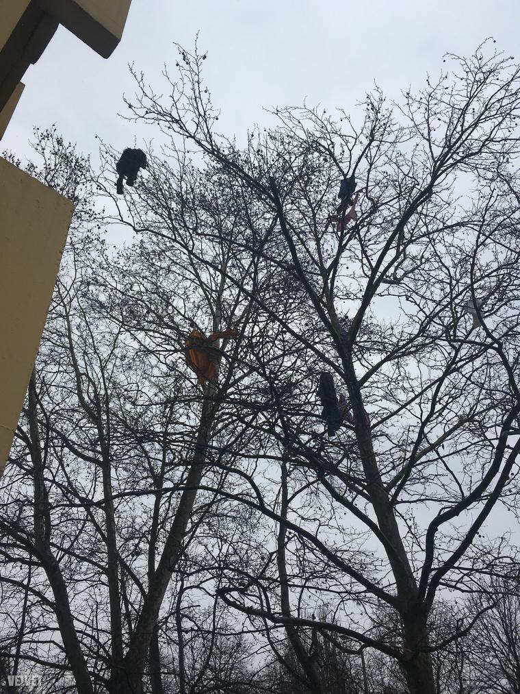 Nem túl valószínű, hogy a szél fújta volna őket oda, inkább minden jel arra mutat, hogy a fa mellett álló ház ablakán dobálták ki a holmikat, feltehetőleg egy szakítás következtében.