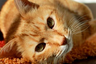nagykep?cikkid=162341&kep=macska-lead