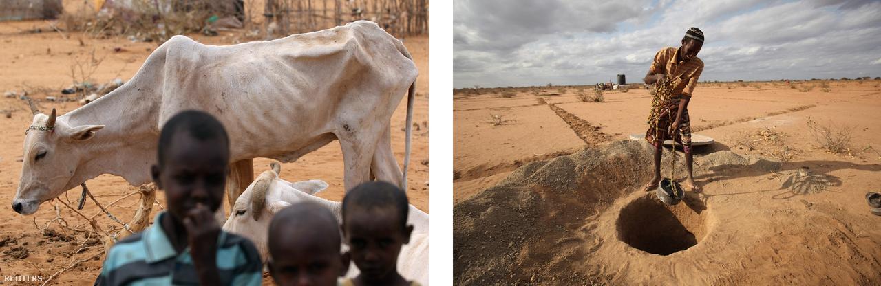 Balra: Alultáplált tehén a Dadaab menekülttábor egyik negyedében. Jobbra: Latrinát ás egy férfi a Dadaab menekülttábor egyik kieső részén.