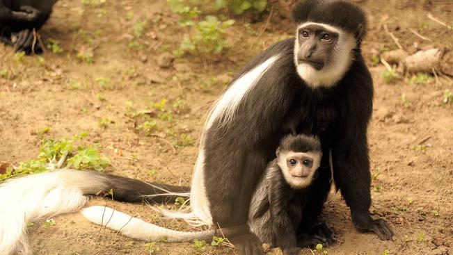 Ritka kismajommal lett gazdagabb a Nyíregyházi Állatpark