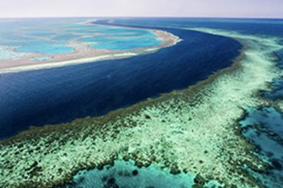 korall lead