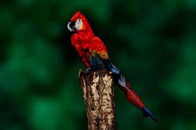papagaj lead