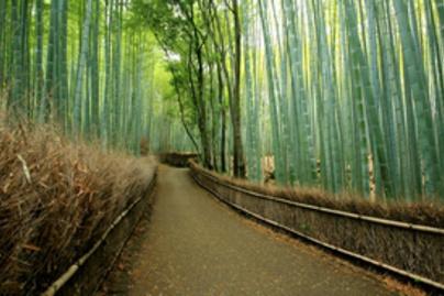 bambusz lead