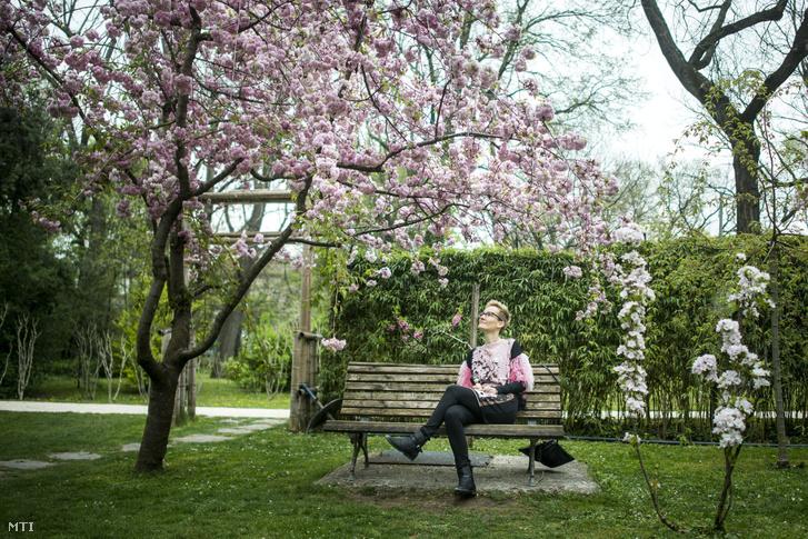 2016. április 8-án így festett egy virágzó japán díszcseresznye a Füvészkertben.