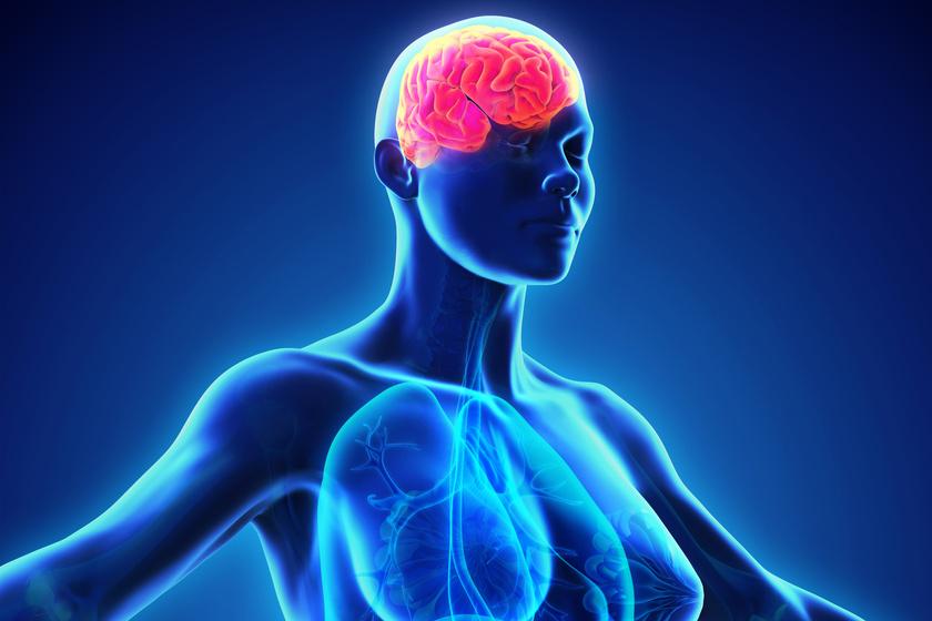 Túlsúly, enyhe elhízás esetén 20%-kal, elhízás, 40-es vagy afeletti BMI esetén 50%-kal nő az agyhártyarák valószínűsége.
