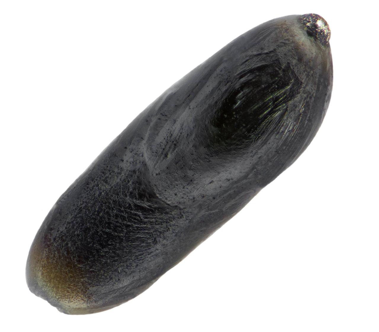 0,6 milliméter hosszú kriptokristályos mikrometeorit, nikkel-vas gyönggyel az egyik végén. A másik végén volt egy hasonló fémdarab, de az kiszabadult, létére bemélyedés utal.