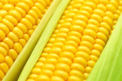 kukorica allergen