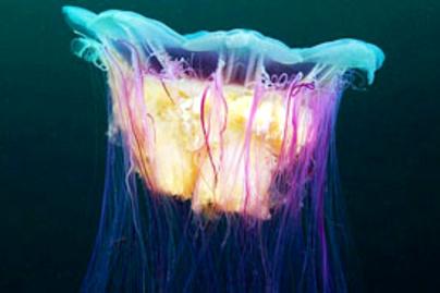 meduzafoto lead
