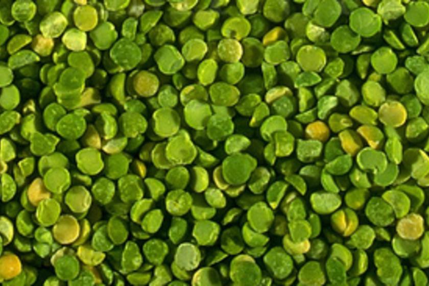 SZERVES SPIRULINA (kékes-zöld mikroalga)