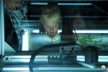 Az Ars Electronica örök kérdése: ez vajon mi, és mit csinál?