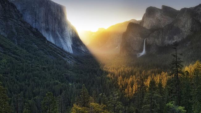 Online medvekövető a Yosemite Nemzeti Parkban