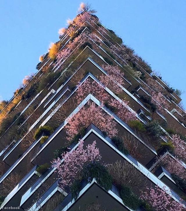 Tavasz Milánó függőleges erdejében