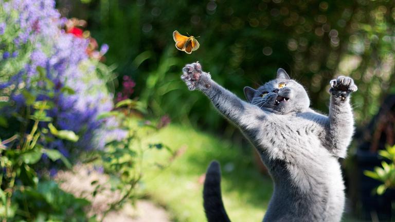 A macskák tömeges kihalási hullámot okoznak