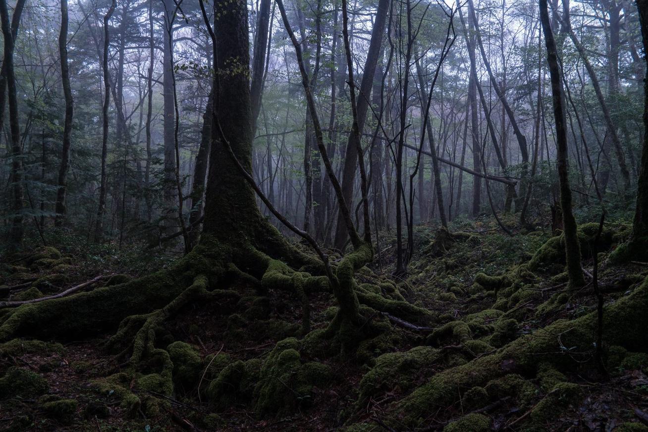 Aokigahara-erdo