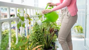 Így kertészkedj az erkélyen sikeresen!