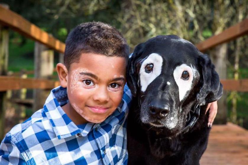 vitiligos kisfiu kutya 5