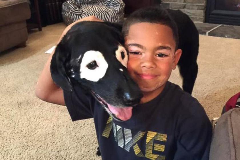 vitiligos kisfiu kutya 3