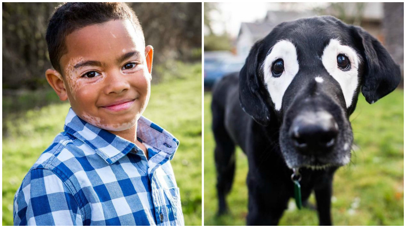 vitiligos kisfiu kutya cover