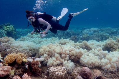korall-buvar