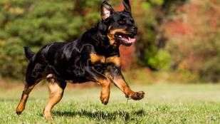 Tüdőn lőtt egy kutyát, hogy kipróbálja milyen érzés