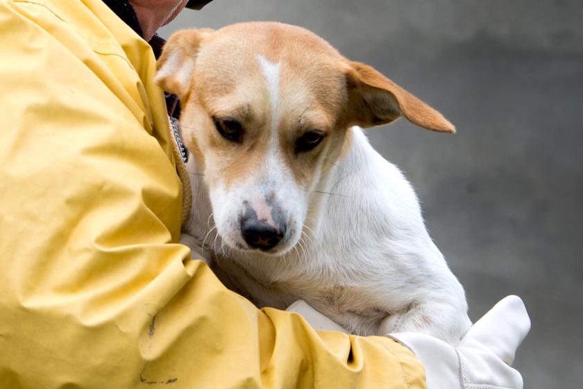 megmentett-kutya