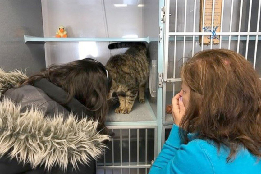 Amikor Susan és lánya a macskához léptek, az azonnal az arcukhoz dörgölte a fejét.