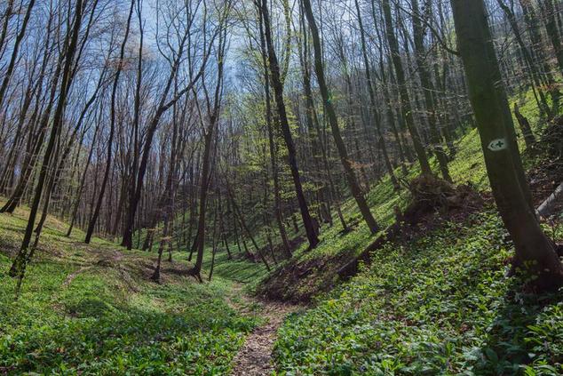 Szent Miklós-völgy tavasszal