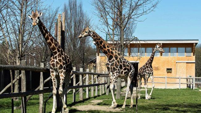 Napelemes, nyitható üvegtetejű téli kerttel nyílik a bécsi zsiráfkifutó