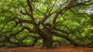 Valószínűtlenül gyönyörű fák