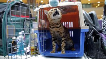 Ezermilliárdokat termelnek a macskák