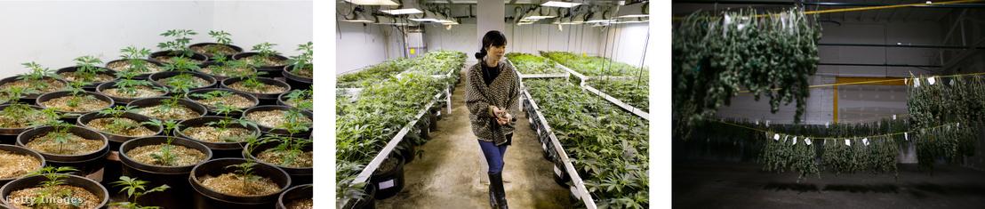 Kristi Kelly vállalkozása egy üres Denveri ipartelep raktárában.