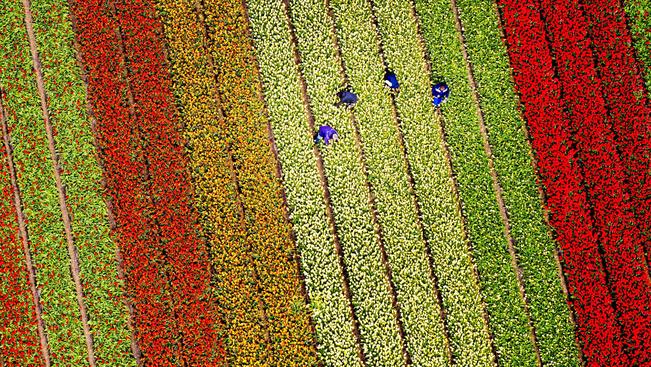 Ahol nem fedi hó a tulipánt: Hollandia madártávlatból