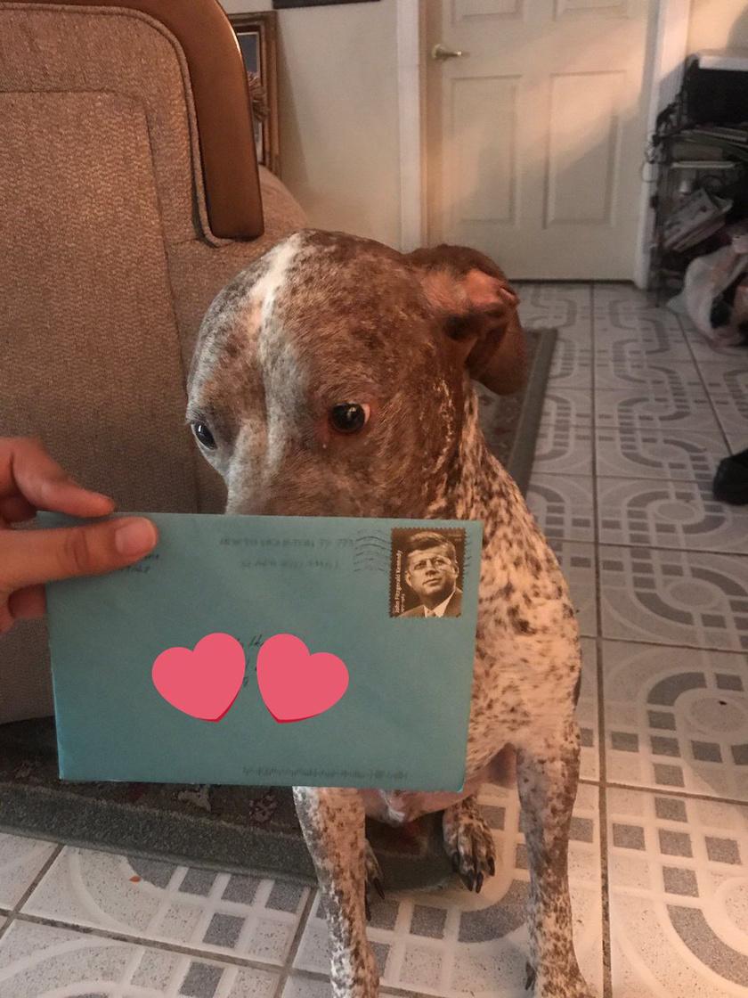 Apollo minden születésnapján érkezik egy szép, színes boríték, benne Frankie, a volt gazdi üdvözlő levelével.