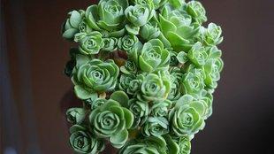 Csodás zöld dekoráció